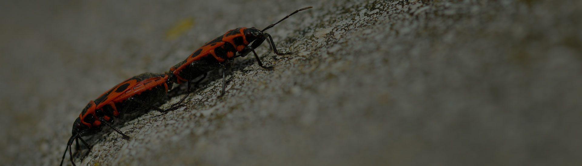 Keeps your home bug free!